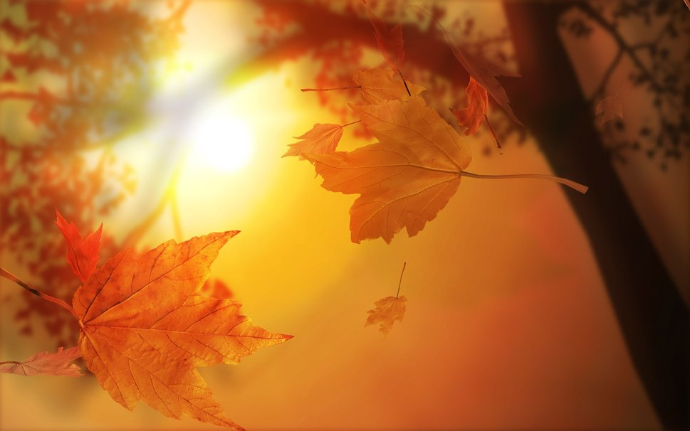 """Résultat de recherche d'images pour """"photos : soleil d'automne"""""""